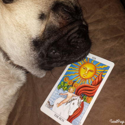 sun-card-tarotpugs