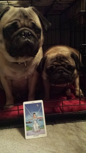 The Tarot Pugs and the Duality of the Two of Swords