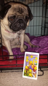 10 pentacles puggy girl
