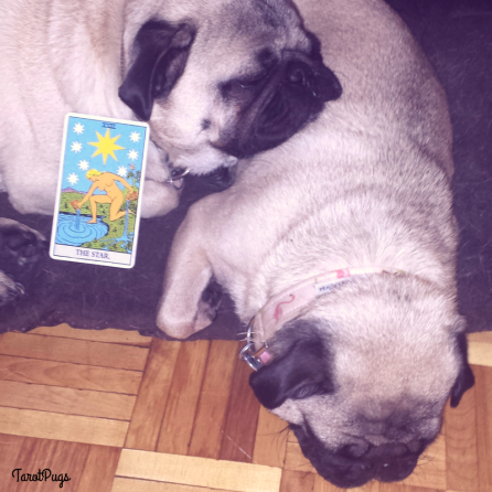 Star TarotPugs 3