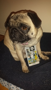 tarotpuggy girl death card