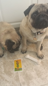 page pentacles tarotpugs Feb 27 2016