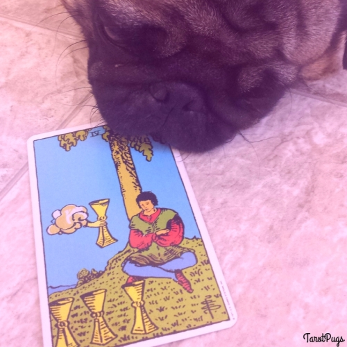 Four of Cups TarotPugs