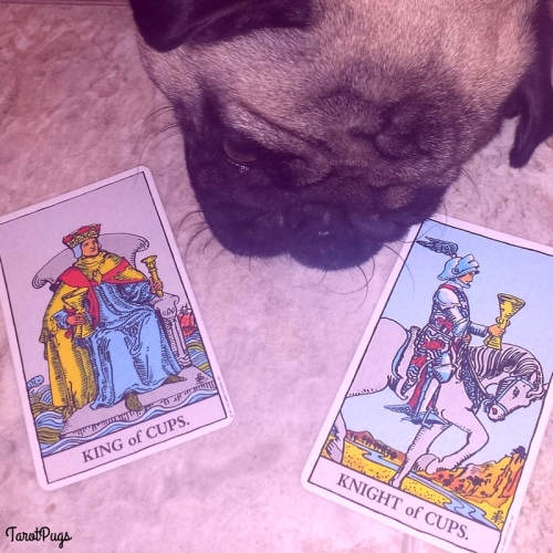 King of Cups Knight of Cups TarotPugs