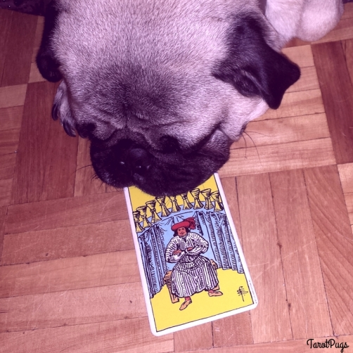Nine of Cups TarotPugs