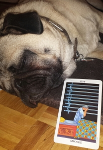 nine swords tarotpug