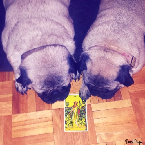 TarotPugs Nine Pentacles