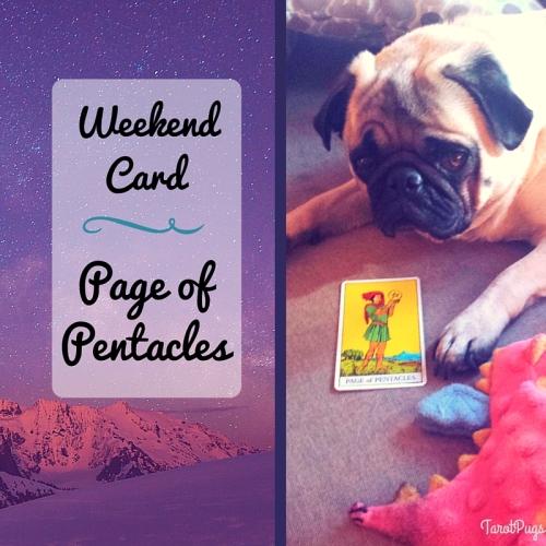 Weekend Card Page of Pentacles Tarot Pugs