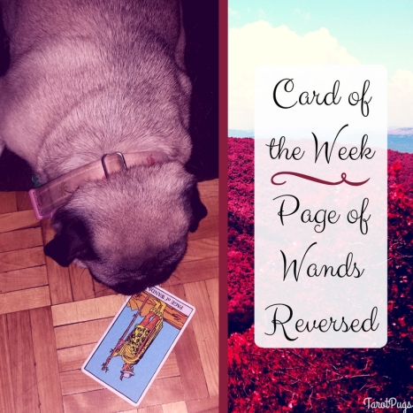Card of the Week Page Wands Reversed