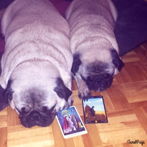 Queen of Pentacles TarotPugs Illness
