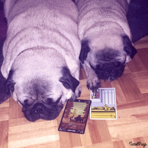 Queen Pentacles TarotPugs Chronic Illness