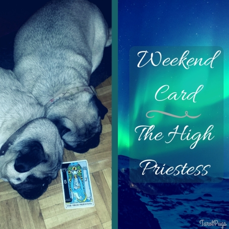 Weekend Card TarotPugs High Priestess