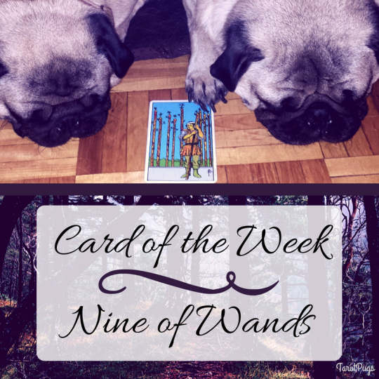 tarot pugs tarotpugs nine wands card week psychic intuitive