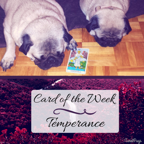 card-of-the-week-temperance-tarot-pugs