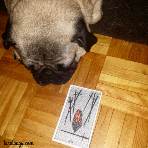 wild-unknown-tarot-pugs-eight-swords