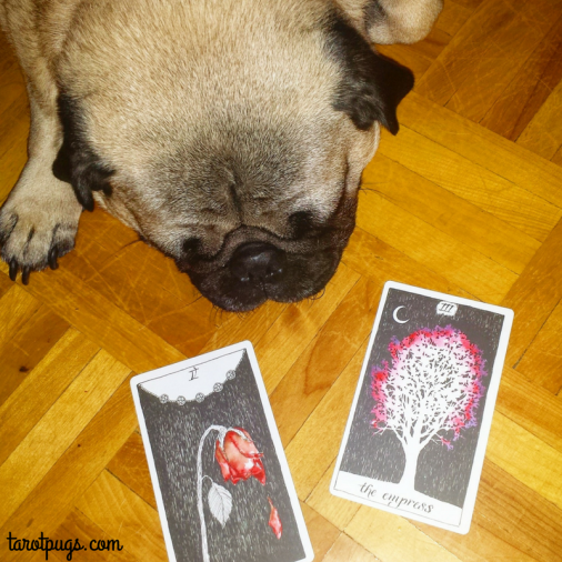 wild-unknown-tarot-pugs-five-pentacles-empress