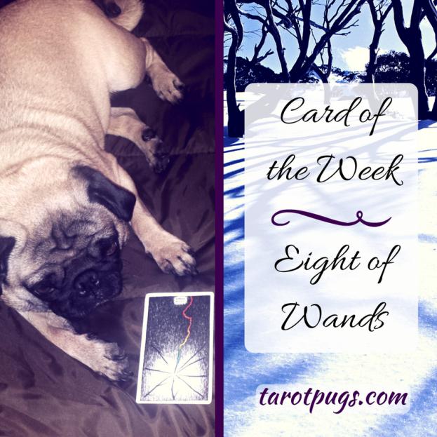 Tarot Pugs TarotPugs Eight Wands Card Week Wild Unknown
