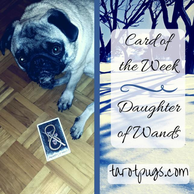 tarotpugs tarot pugs daughter wands wild unknown tarot card week
