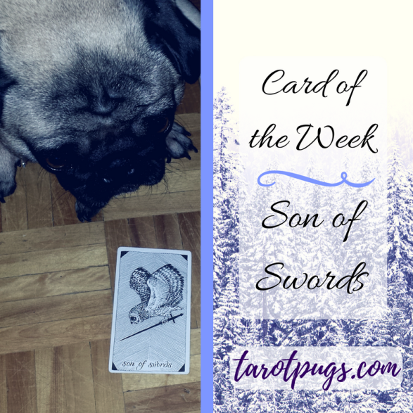 Card Week TarotPugs Tarot Pugs Son Swords Wild Unknown