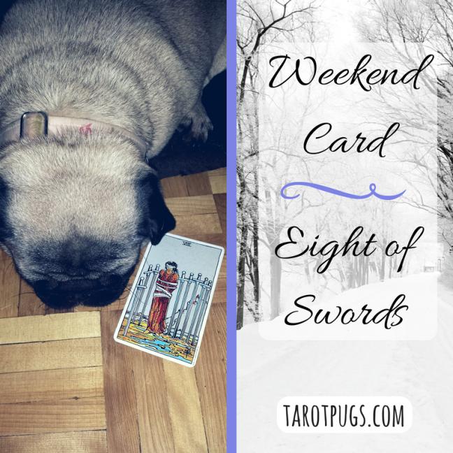 Weekend Tarot Card TarotPugs Pug Eight of Swords