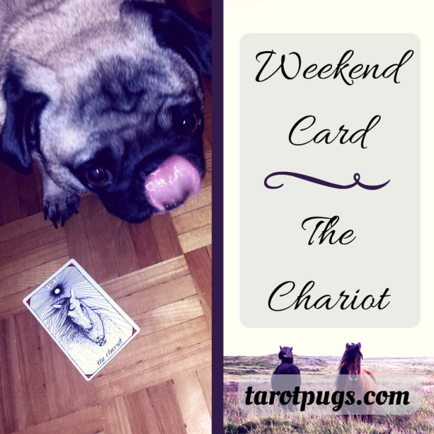 pugs tarotpugs tarot chariot weekend