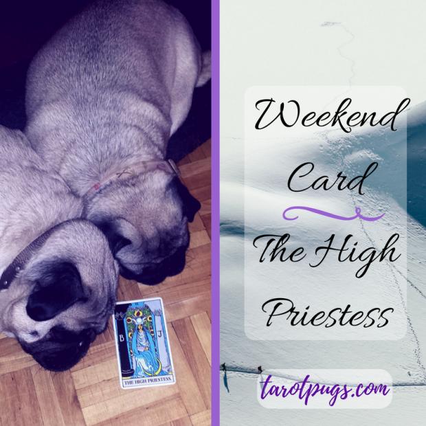 TarotPugs Pugs Tarot High Priestess Rider Waite Smith Weekend