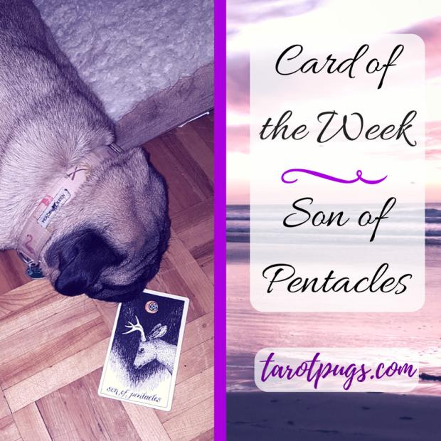 TarotPugs Tarot Pugs Pug Son Pentacles Wild Unknown Card of the Week Pug