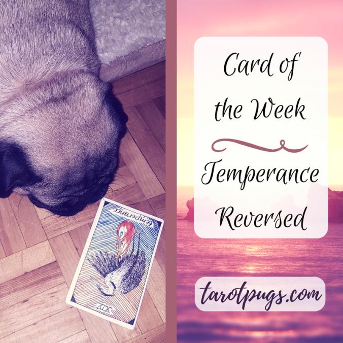 TarotPugs Tarot Pugs Temperance Card Week Pug
