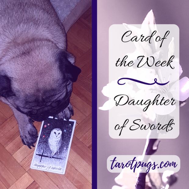 TarotPugs Tarot Pugs Daughter Swords Card Week Wild Unknown