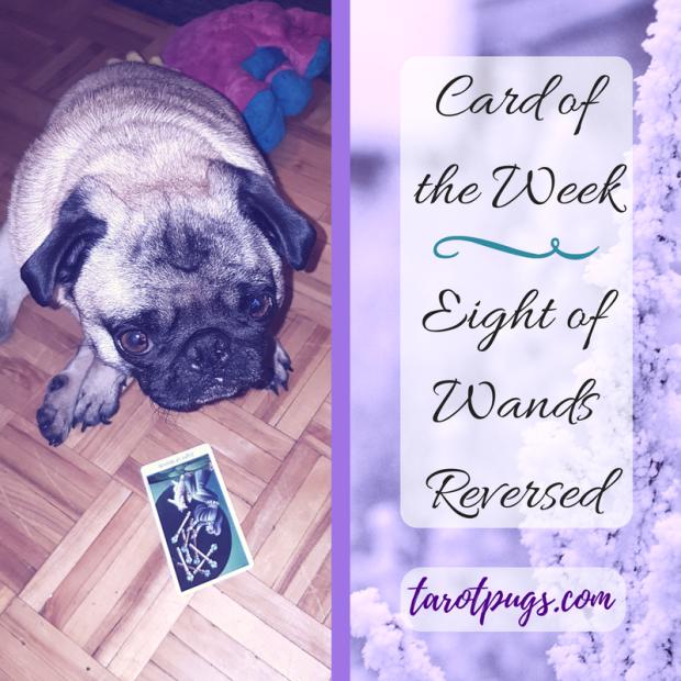 card-of-the-week-eight-wands-tarotpugs-2017