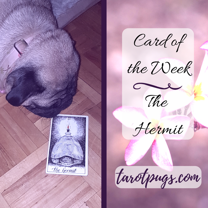 Tarot Pugs Card Week TarotPugs The Hermit Wild Unknown Tarot
