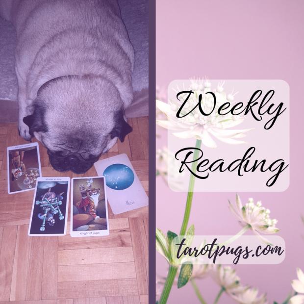 Weekly Reading Tarot TarotPugs Pugs WIld Unknown Arcana of Astrology