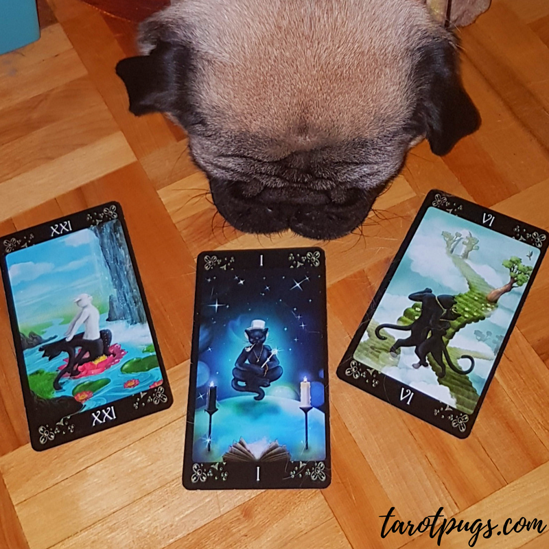 Black Cats Tarot Weekly Reading The World The Magcian The Lovers