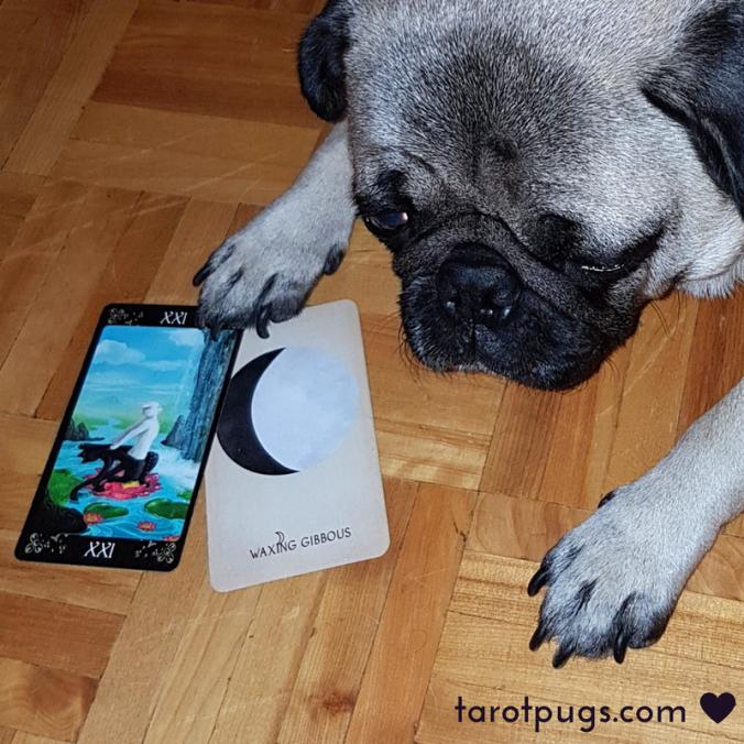 TarotPugs Tarot Pugs Pug Arcana of Astrology Weekend Reading