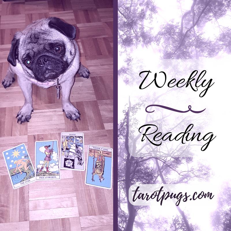 Tarot Pugs TarotPugs Rider Waite Smith RWS Weekly Reading Star Page Wands Swords