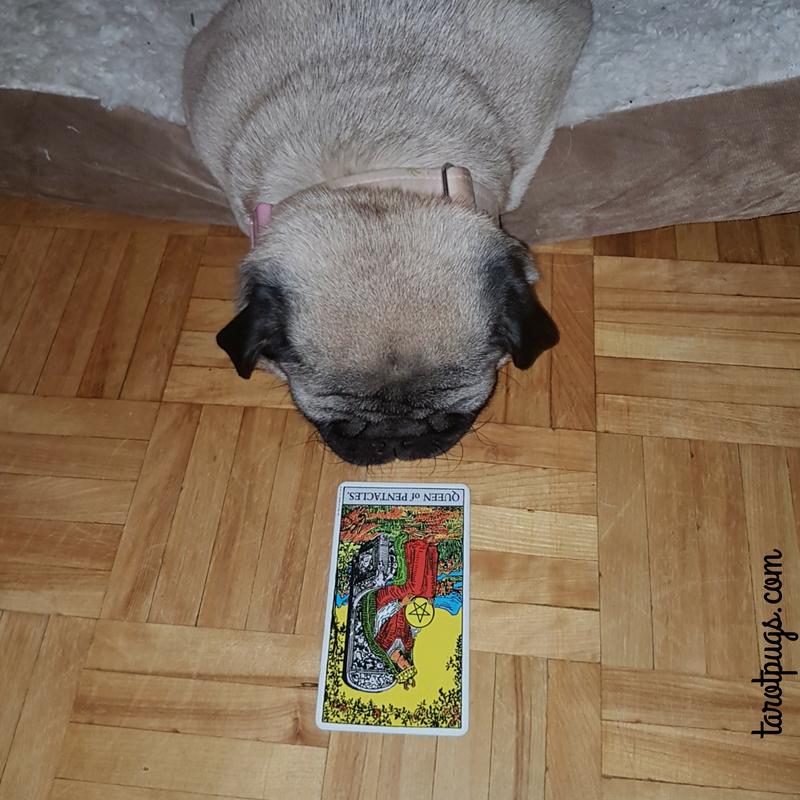 Tarot Pugs TarotPugs Pug Queen Pentacles Rider Waite
