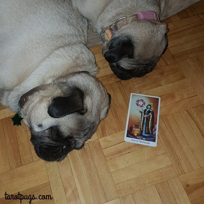 Tarot Pugs TarotPugs Tarot of the Cat People Ace of Pentcles