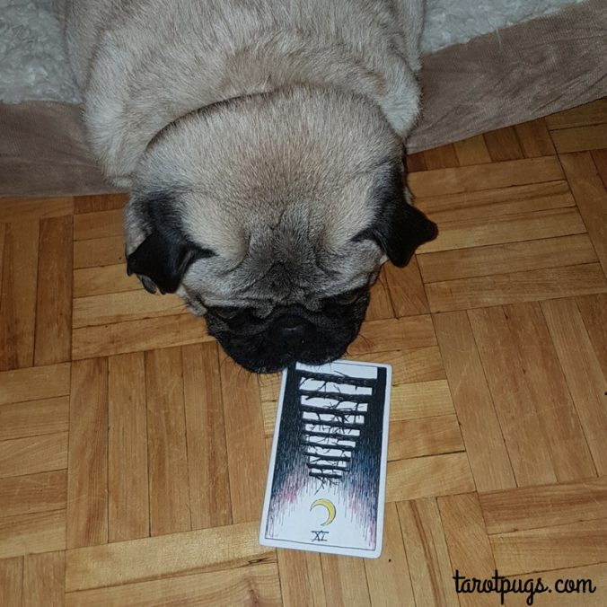 Tarot Pugs TarotPugs Nine Wands The Wild Unknown Weekly Reading