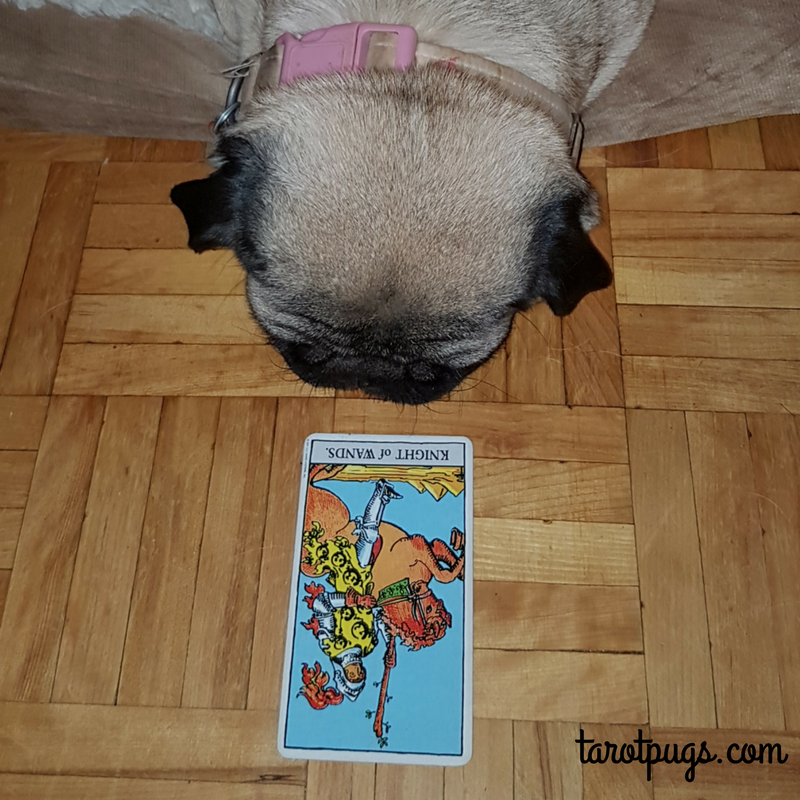 Knight Wands RWS Rider Waite Smith TarotPugs Tarot Pugs Pug