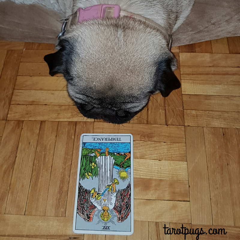 TarotPugs Tarot Pugs Pug Temperance Rider Waite Smith RWS