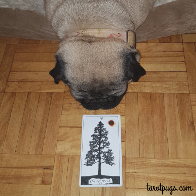 The Emperor TarotPugs Tarot Pugs Pug Wild Unknown Tarot Weekly Reading