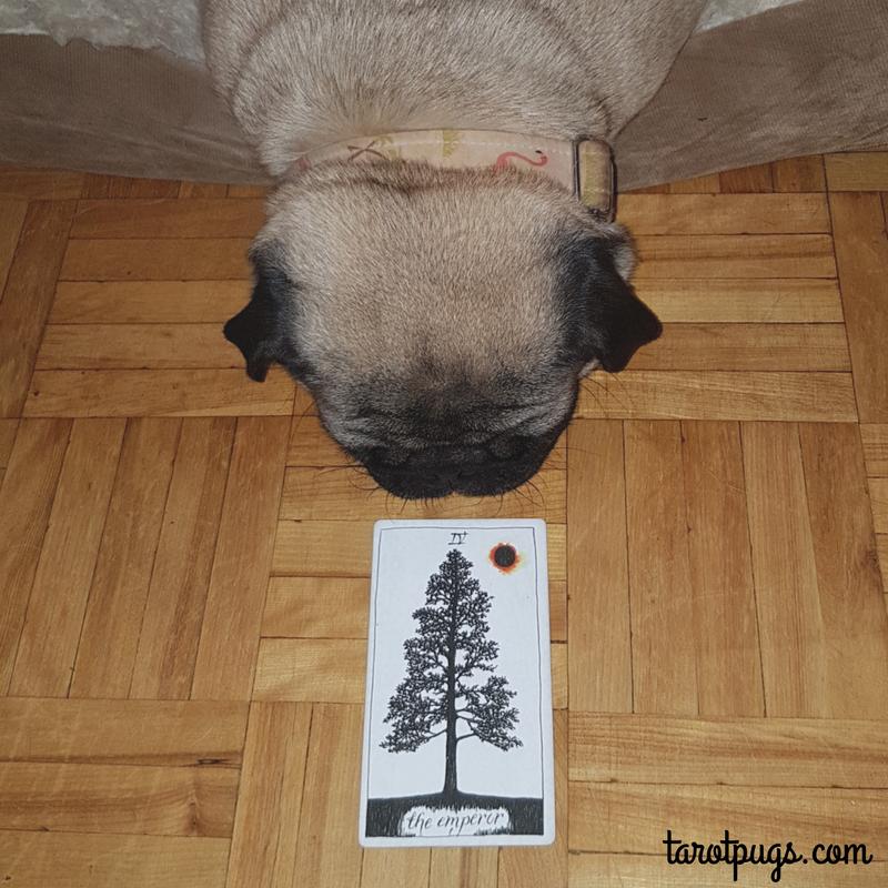 The Emperor TarotPugs Tarot Pugs Pug Wild Unknown Tarot Weekly Reading