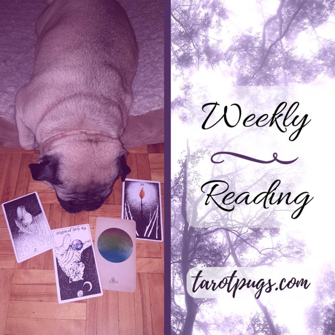 Weekly Reading Tarot Pugs TarotPugs Pug Wild Unknown Arcana Astrology
