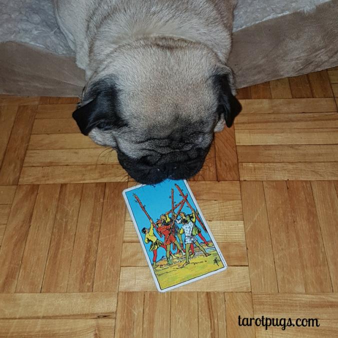 5 Wands Tarot Pugs TarotPugs Pug RWS Weekly Reading