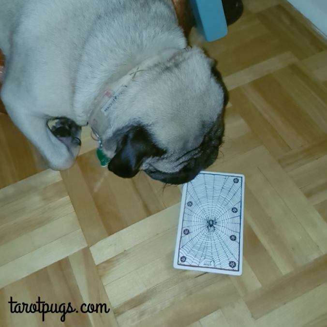 Eight 8 Pentacles Wild Unknown Tarot TarotPugs Pugs Weekly Reading