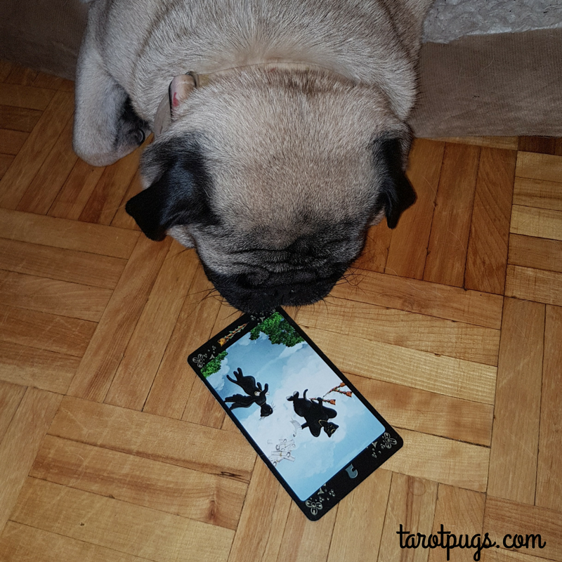 Page of Wands Black Cats Tarot TarotPugs Pugs