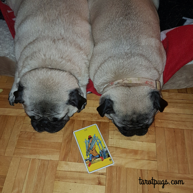 7 Swords RWS Rider Waite Smith TarotPugs Tarot Pugs Pug Weekly Reading