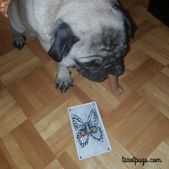 Tarot Pugs TarotPugs Wild Unknown Two 2 Pentacles Pug Weekly Reading