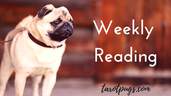 Tarot TarotPugs Pugs Weekly Reading