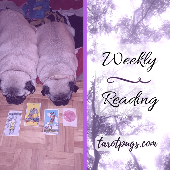 Tarot Pugs TarotPugs Pugs Weekly Reading September 2017 Rider Waite Compendium Constellations